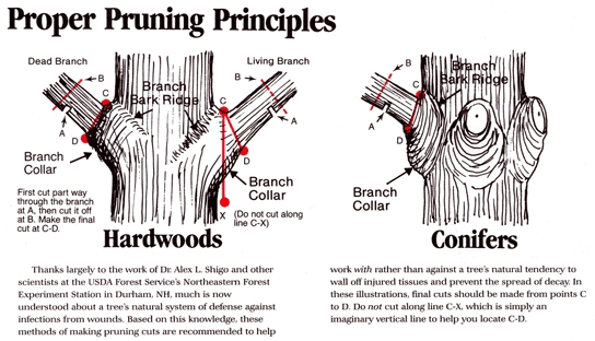 foundation wall diagram city of coeur d alene pruning